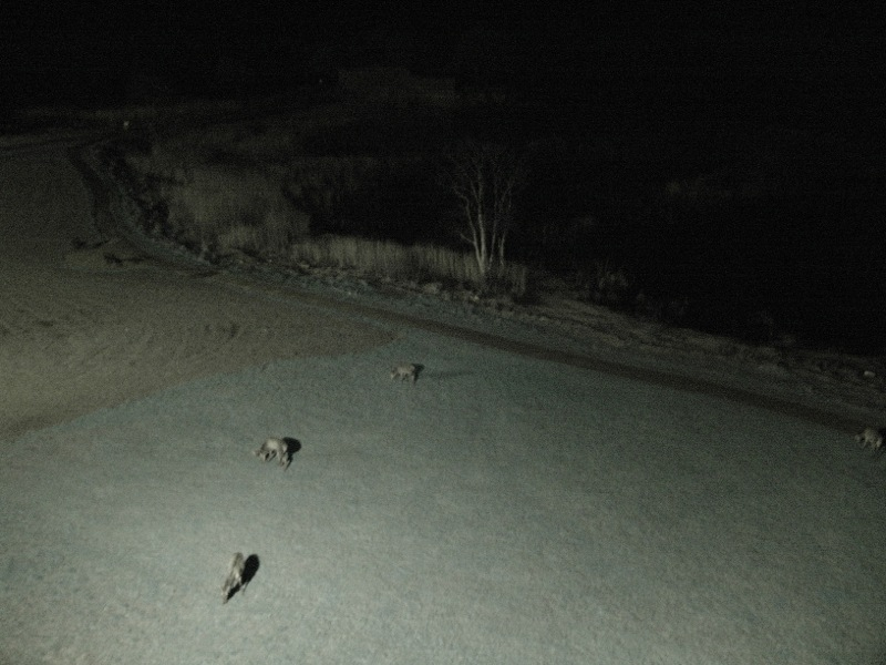 A midnight visit from a herd of deer munching on the grass.