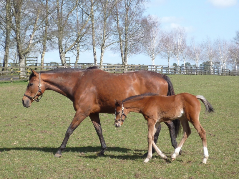 Mare & Foal @ Irish National Stud