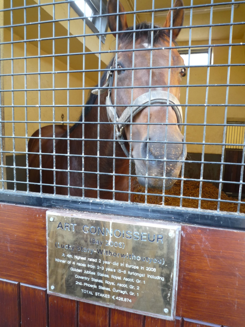 Stallion Boxes