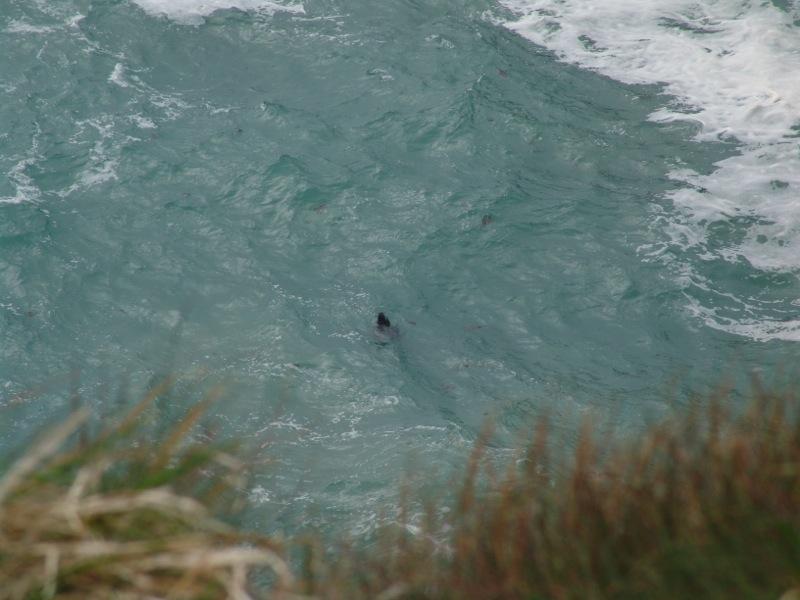 Seal spotting.